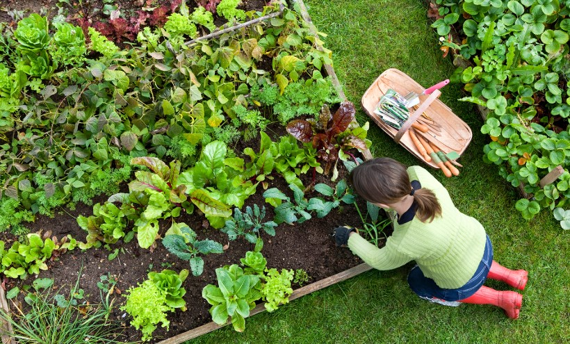 Planting Gardening for Survival